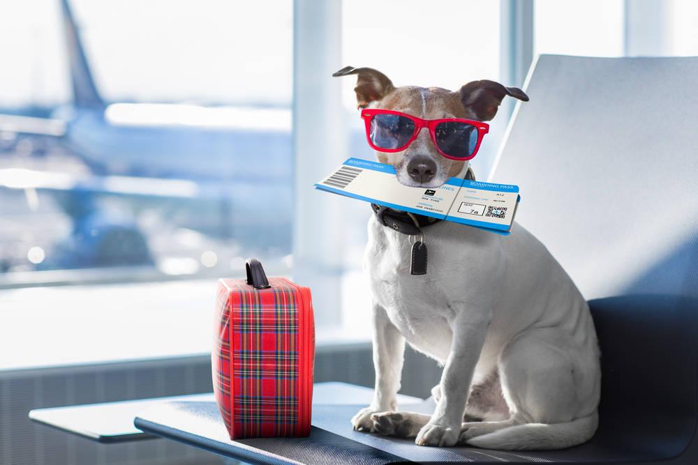 ¿Van seguras nuestras mascotas cuando viajan en avión?